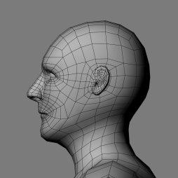 Side_Head_Ivan_Wireframe1